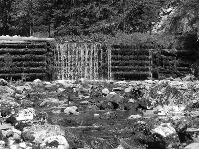 Dam in the Woods: B&W